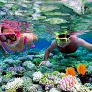 San hô biển Phú Quốc